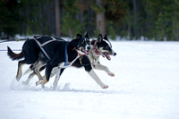 Musher Jenny Greger's leader dogs at start of race