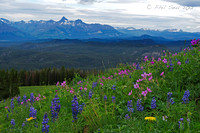 Pilot and Index Peaks Wildflowers